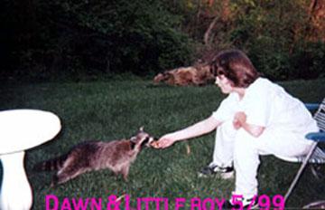 Pic of Dawn feeding raccoon