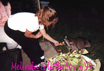 Melinda feeding raccoon